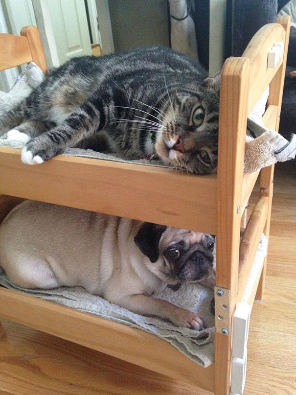 duktig-japanese-cat-bed-ikea-10