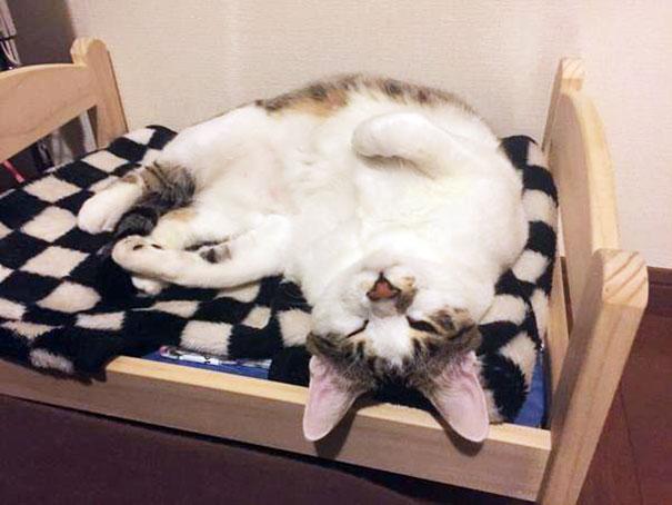 duktig-japanese-cat-bed-ikea-11