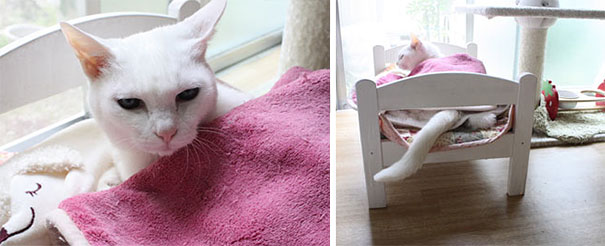 duktig-japanese-cat-bed-ikea-7