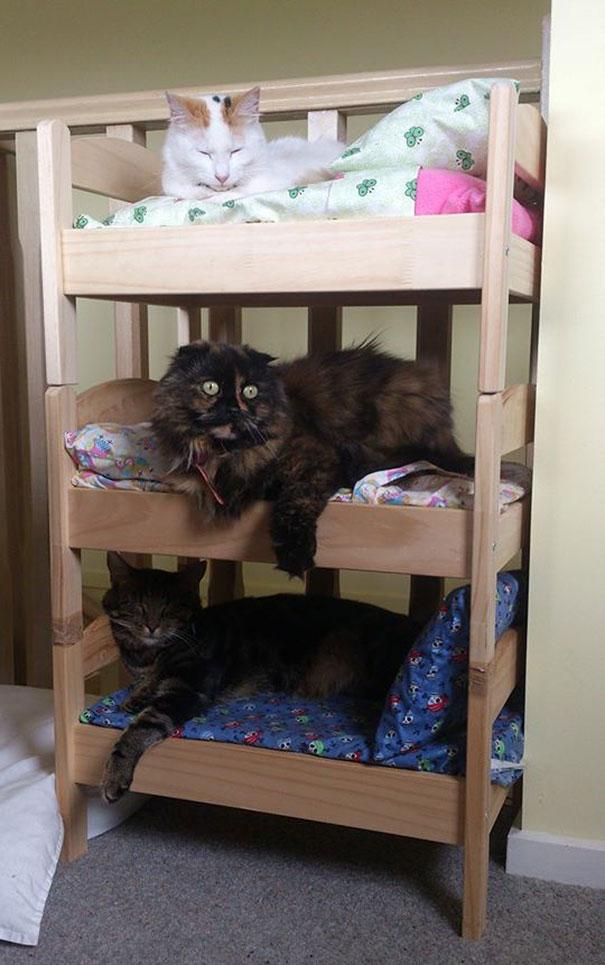 duktig-japanese-cat-bed-ikea-8