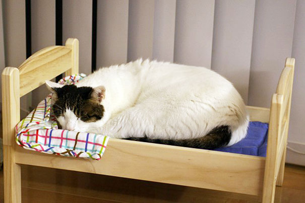 duktig-japanese-cat-bed-ikea-9