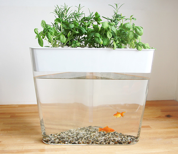 Ecofarm this stylish aquarium uses fish waste to grow for Fish tank hydroponic garden