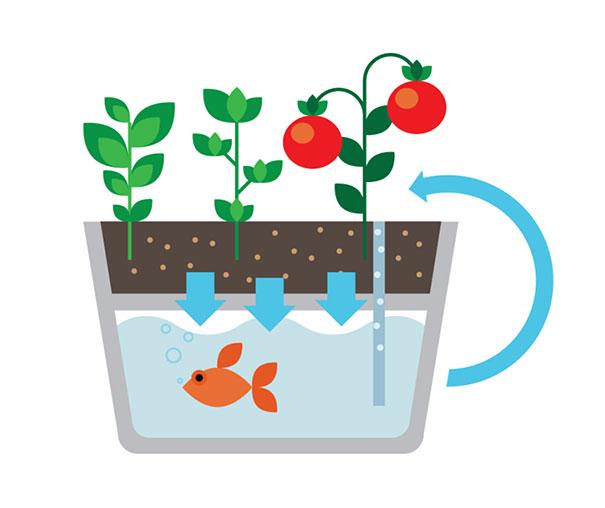 ecofarm-aquaponic-food-production-aquaculpture-hydroponics-fish-tank-4