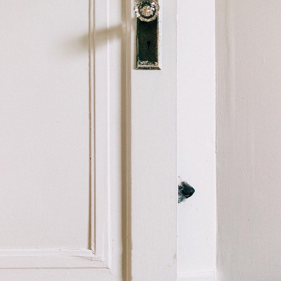 find-momo-dog-photography-andrew-knapp-24