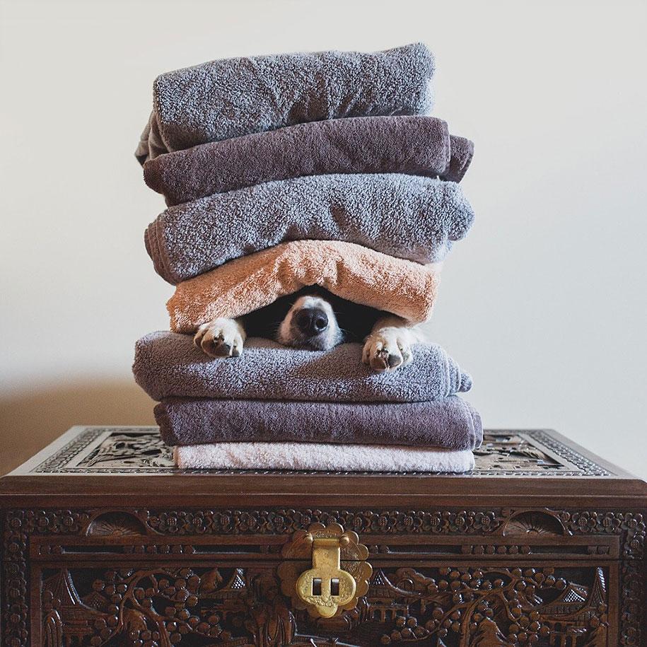 find-momo-dog-photography-andrew-knapp-30