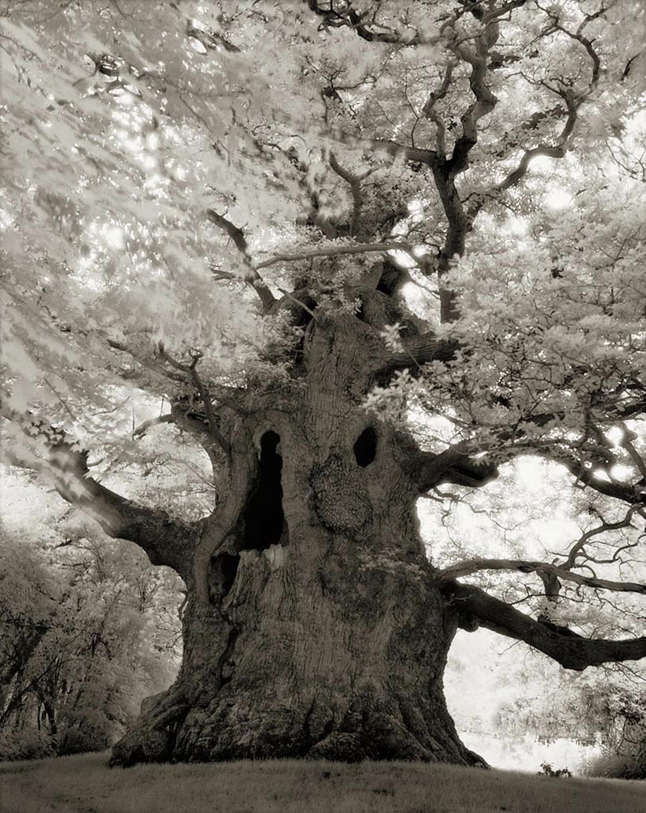 ancient-trees-portraits-of-time-nature-photography-beth-moon-10