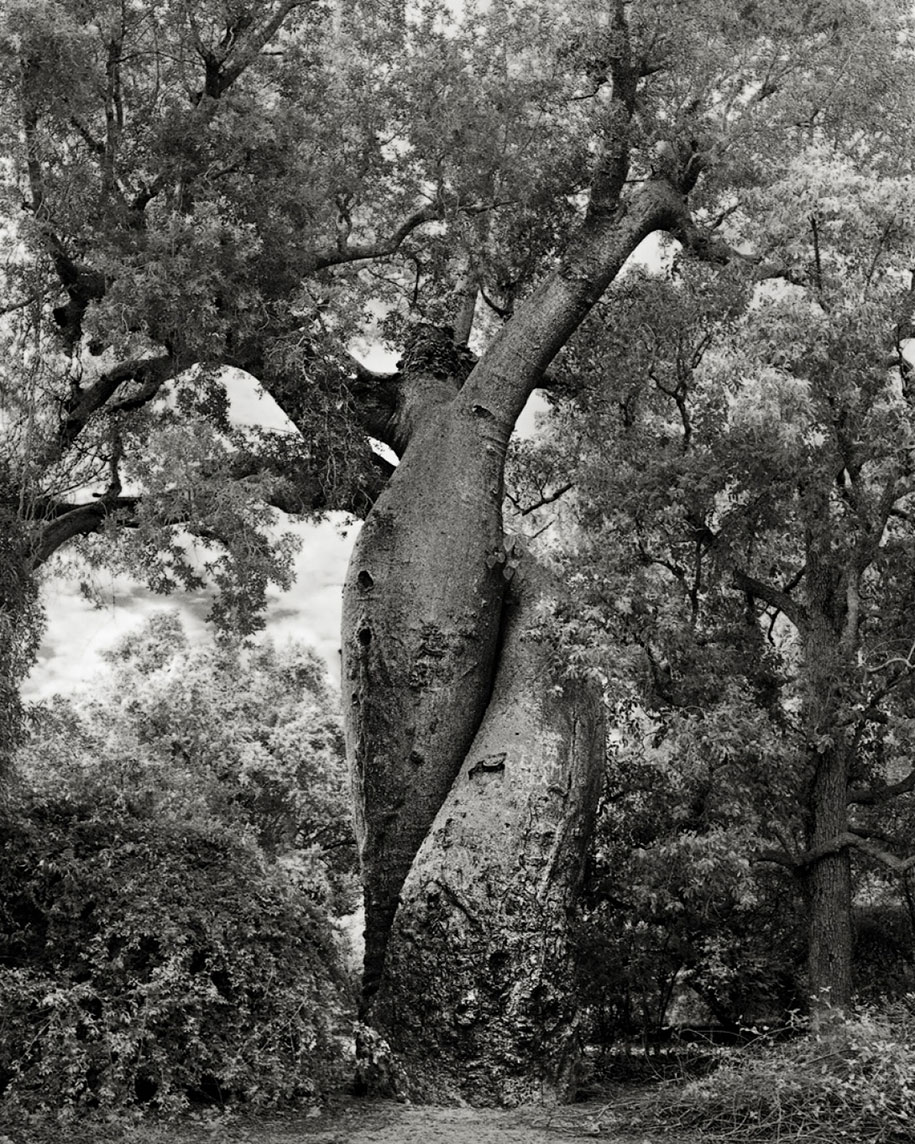 ancient-trees-portraits-of-time-nature-photography-beth-moon-13