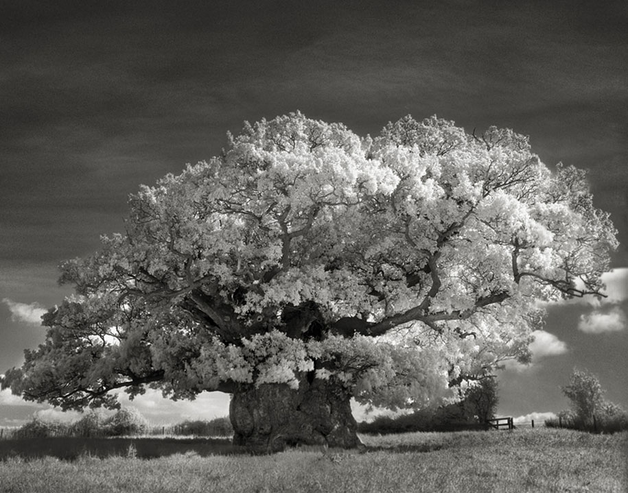 ancient-trees-portraits-of-time-nature-photography-beth-moon-17