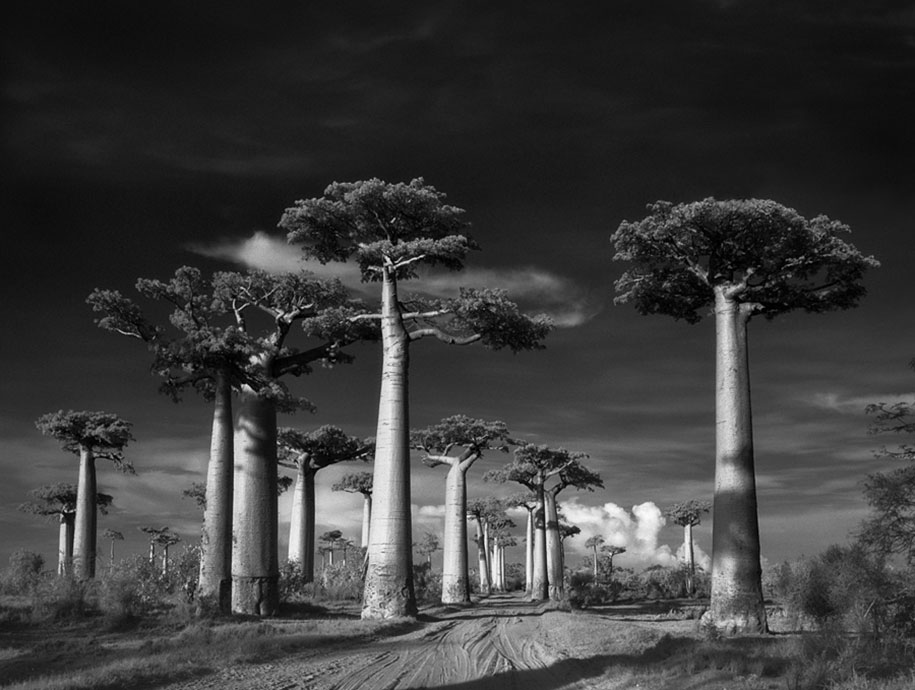 ancient-trees-portraits-of-time-nature-photography-beth-moon-18