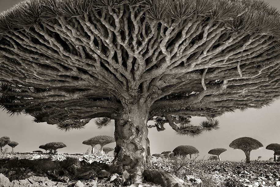 ancient-trees-portraits-of-time-nature-photography-beth-moon-19