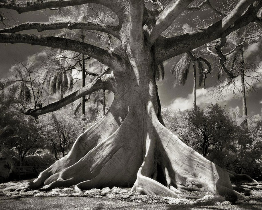 ancient-trees-portraits-of-time-nature-photography-beth-moon-2