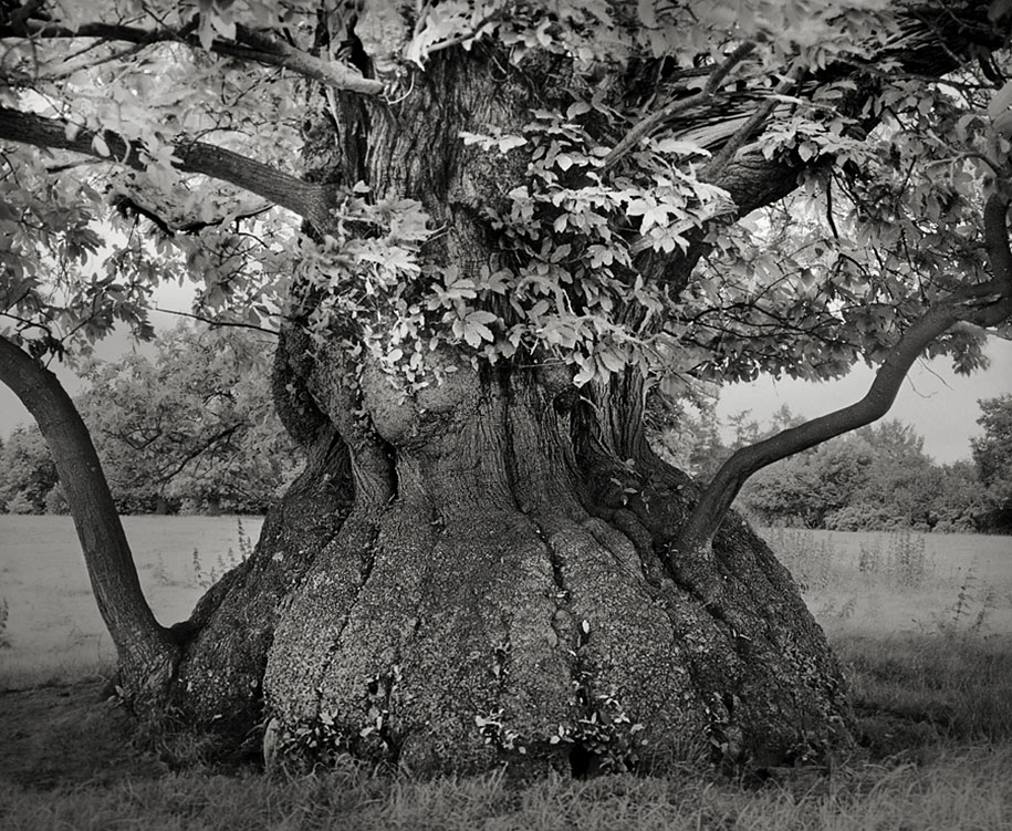 ancient-trees-portraits-of-time-nature-photography-beth-moon-20