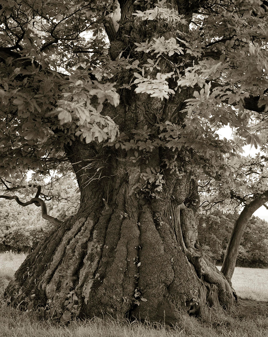 ancient-trees-portraits-of-time-nature-photography-beth-moon-6