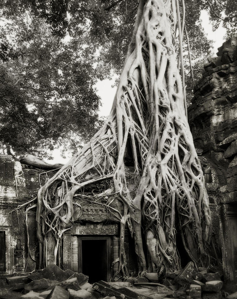 ancient-trees-portraits-of-time-nature-photography-beth-moon-7