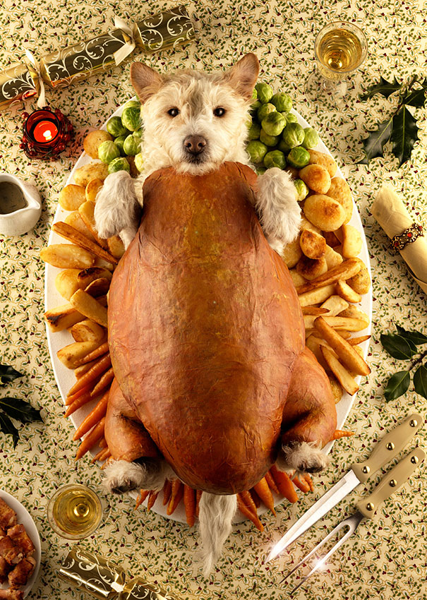 christmas-dog-costume-holiday-card-peter-thorpe-6