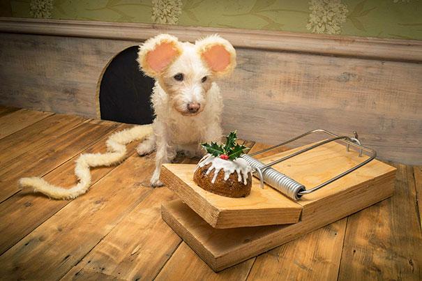 christmas-dog-costume-holiday-card-peter-thorpe-7