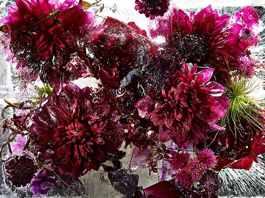 locked-in-the-ether-frozen-flowers-kenji-shibata-1