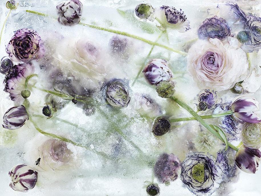 Flowers Frozen In Ice Cubes Look Like Watercolors