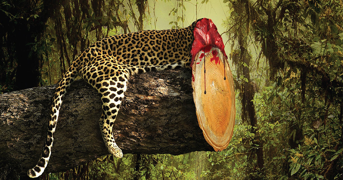 Shocking Print Ads Show The Horrible Effects Of Deforestation