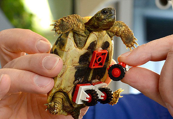 tortoise-lego-wheelchair-carsten-plischke-4