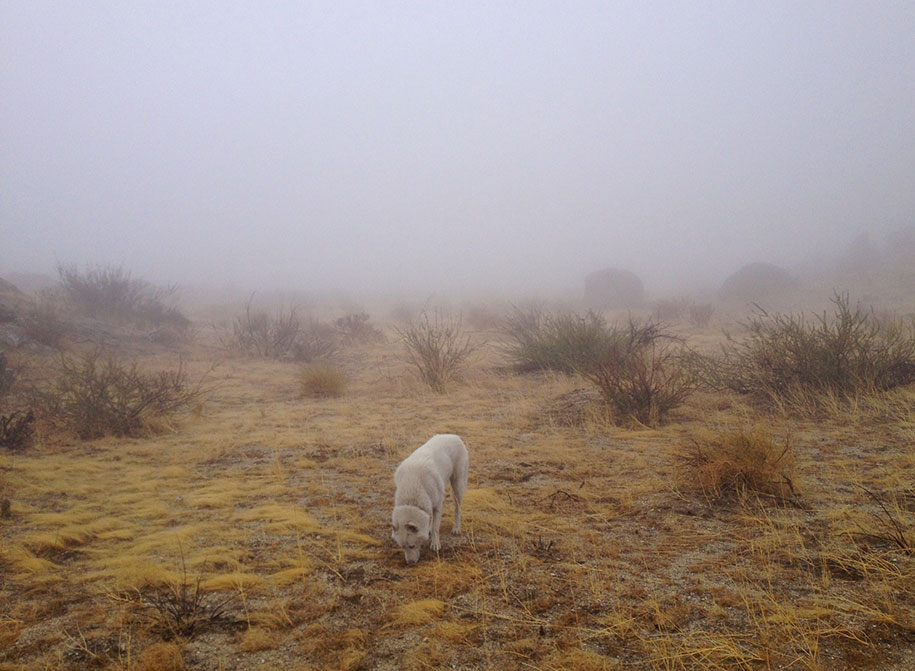 wolf-dog-adventures-travel-photography-john-stortz-1