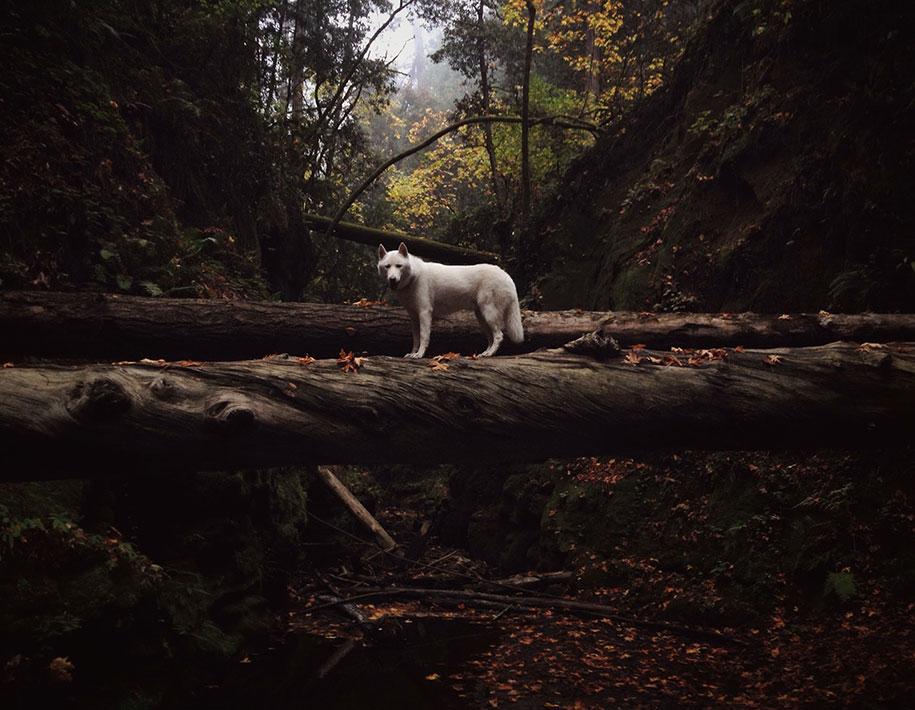 wolf-dog-adventures-travel-photography-john-stortz-11