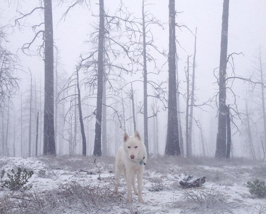 wolf-dog-adventures-travel-photography-john-stortz-15