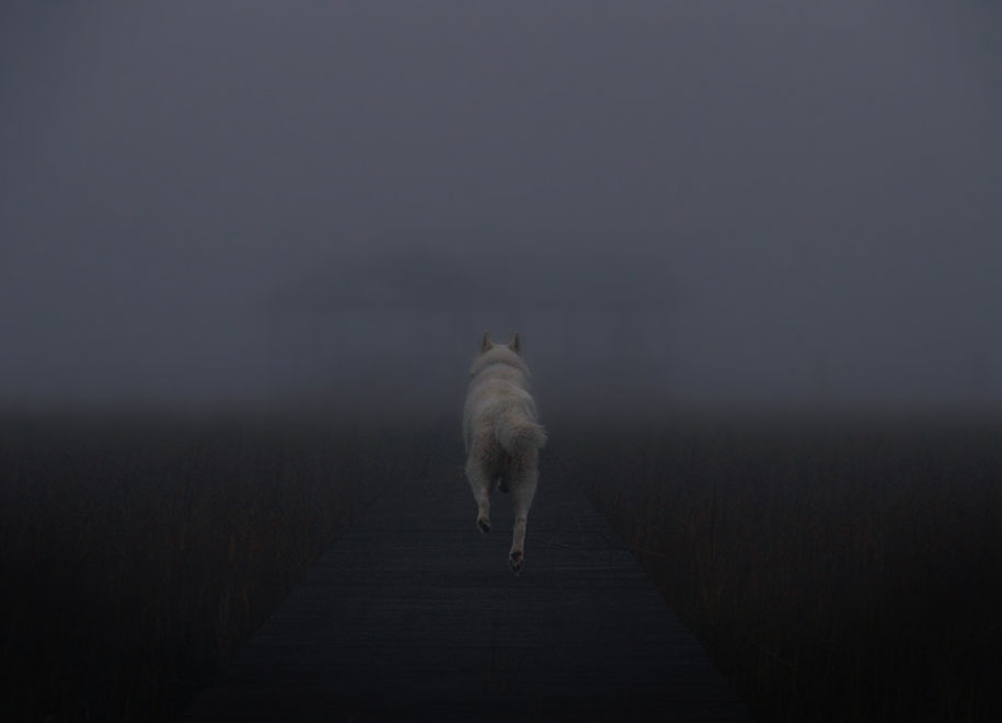 wolf-dog-adventures-travel-photography-john-stortz-17
