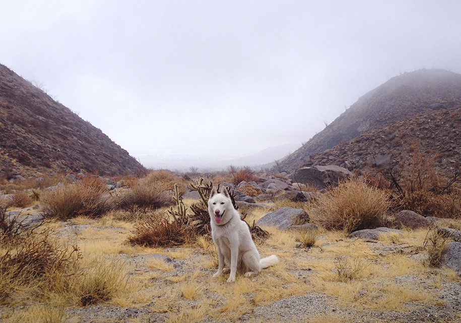 wolf-dog-adventures-travel-photography-john-stortz-2