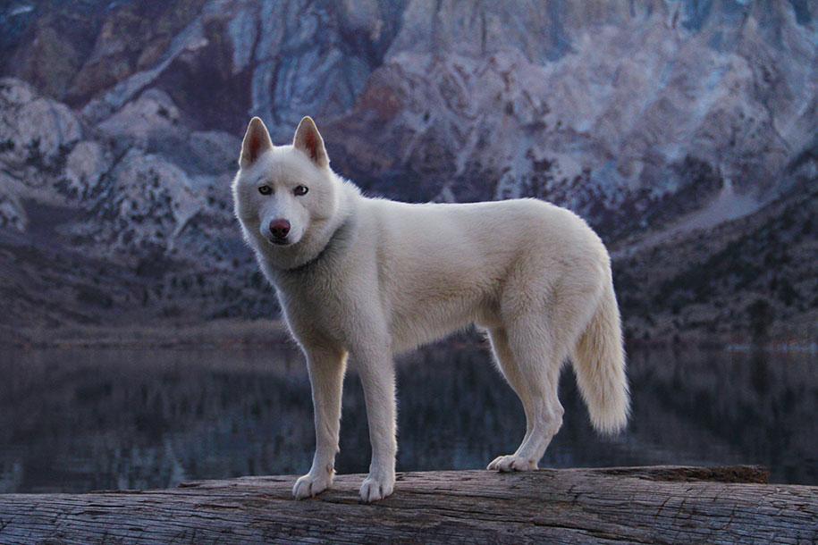 wolf-dog-adventures-travel-photography-john-stortz-8