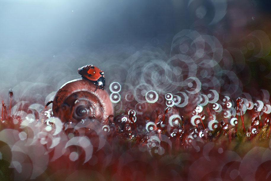 bugs-snails-mushrooms-macro-photography-nature-vadim-trunov-10