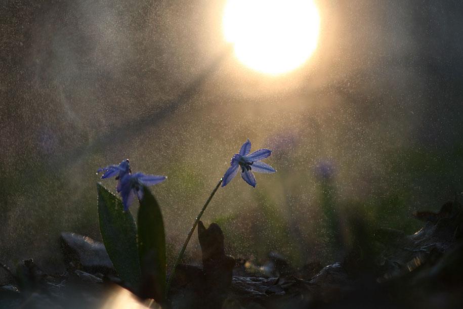 bugs-snails-mushrooms-macro-photography-nature-vadim-trunov-11