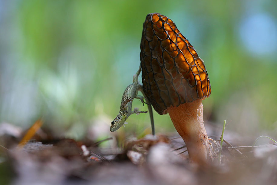 bugs-snails-mushrooms-macro-photography-nature-vadim-trunov-12