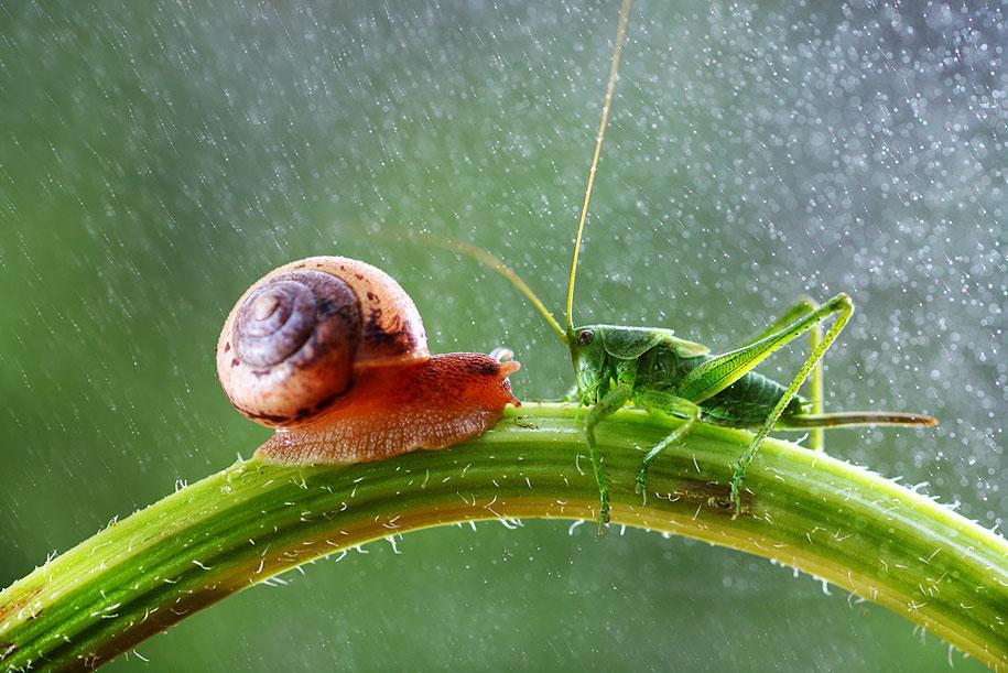 bugs-snails-mushrooms-macro-photography-nature-vadim-trunov-15