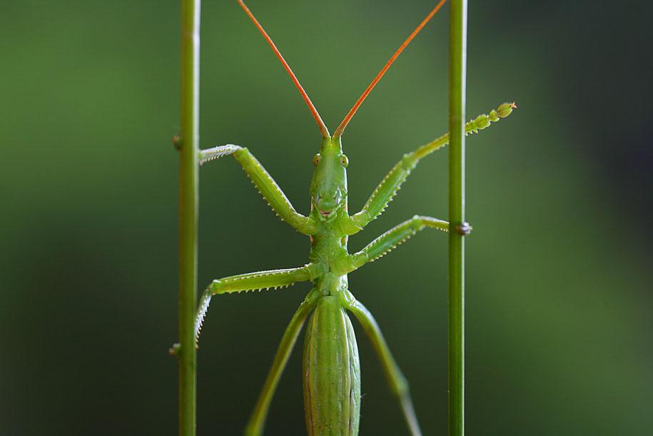 bugs-snails-mushrooms-macro-photography-nature-vadim-trunov-17