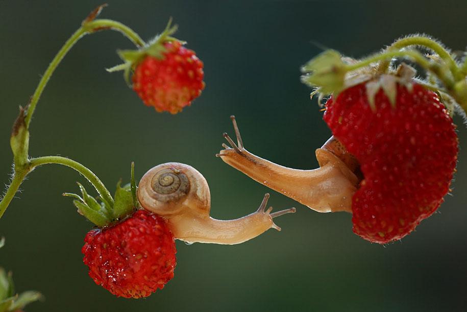 bugs-snails-mushrooms-macro-photography-nature-vadim-trunov-18