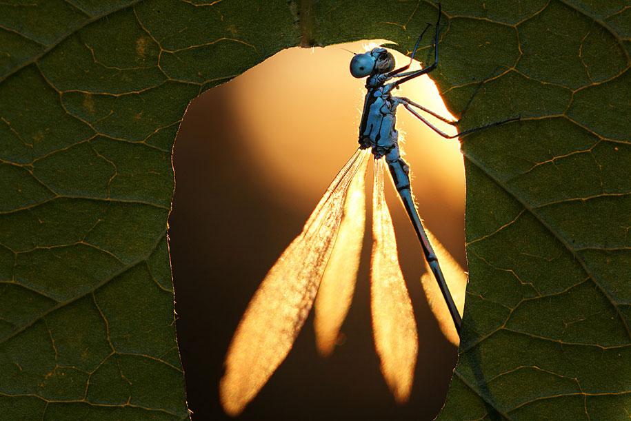 bugs-snails-mushrooms-macro-photography-nature-vadim-trunov-19