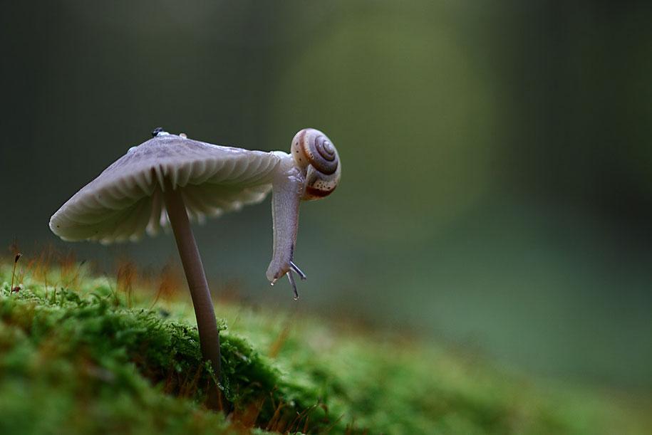 bugs-snails-mushrooms-macro-photography-nature-vadim-trunov-2