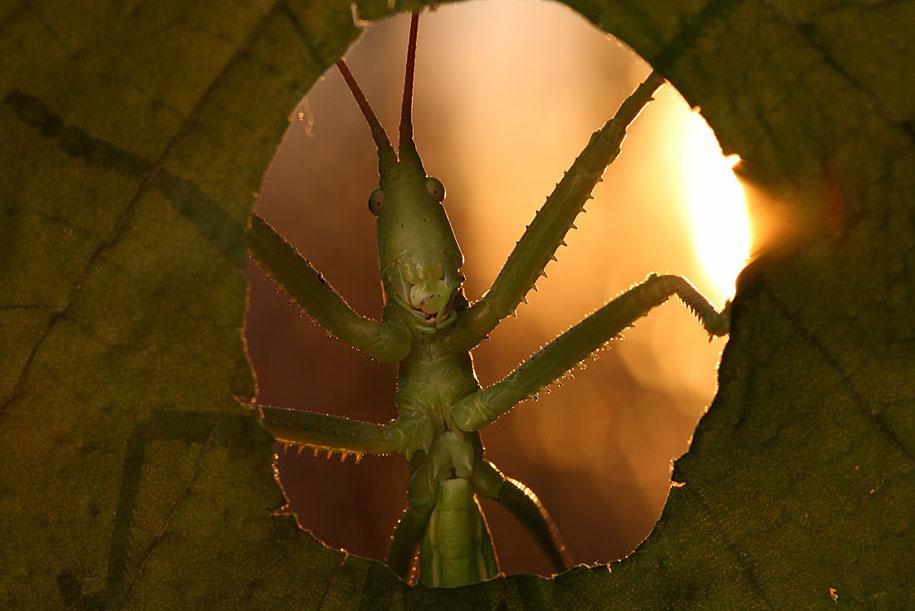 bugs-snails-mushrooms-macro-photography-nature-vadim-trunov-21