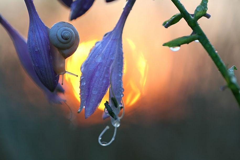 bugs-snails-mushrooms-macro-photography-nature-vadim-trunov-22