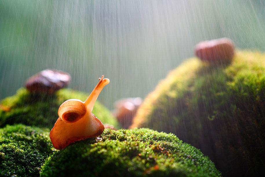 bugs-snails-mushrooms-macro-photography-nature-vadim-trunov-23