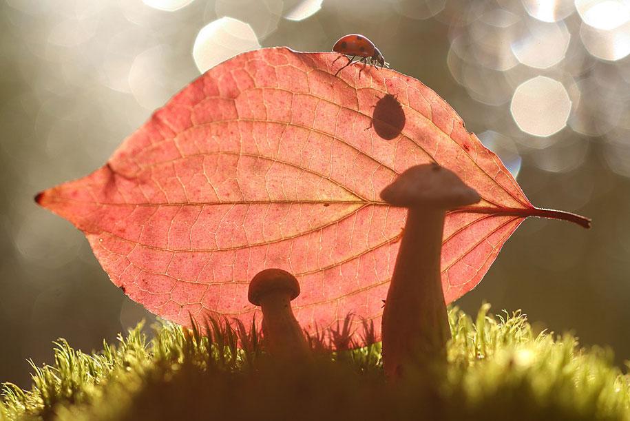 bugs-snails-mushrooms-macro-photography-nature-vadim-trunov-24