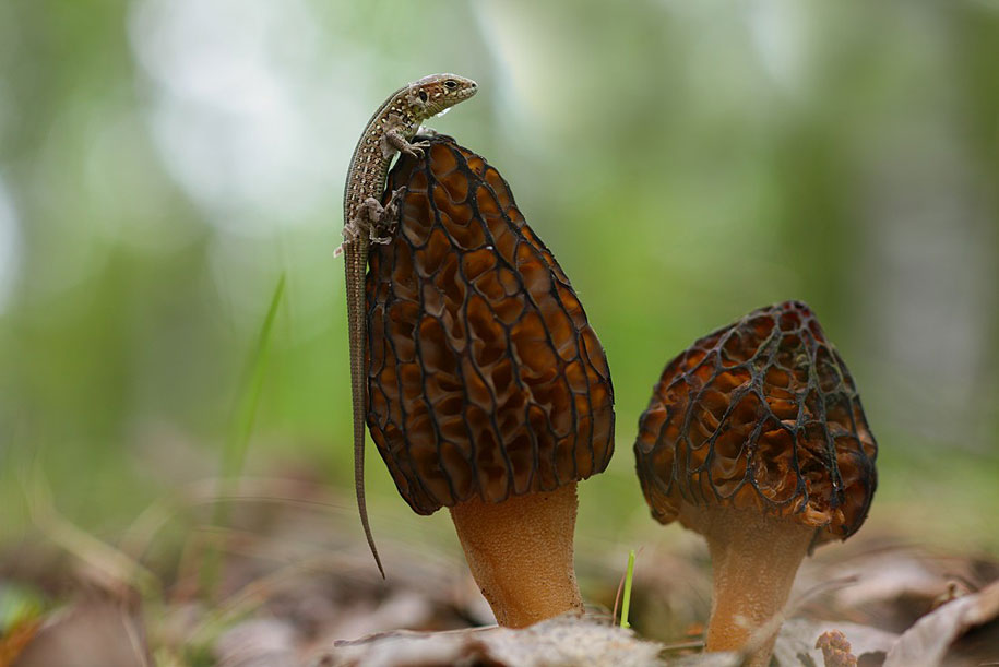 bugs-snails-mushrooms-macro-photography-nature-vadim-trunov-26