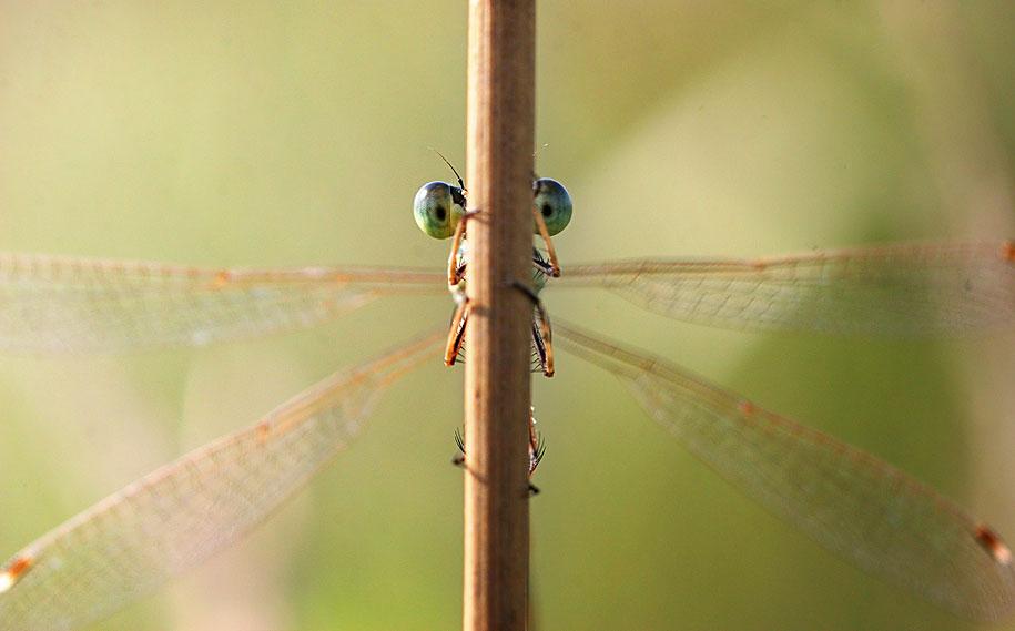 bugs-snails-mushrooms-macro-photography-nature-vadim-trunov-27