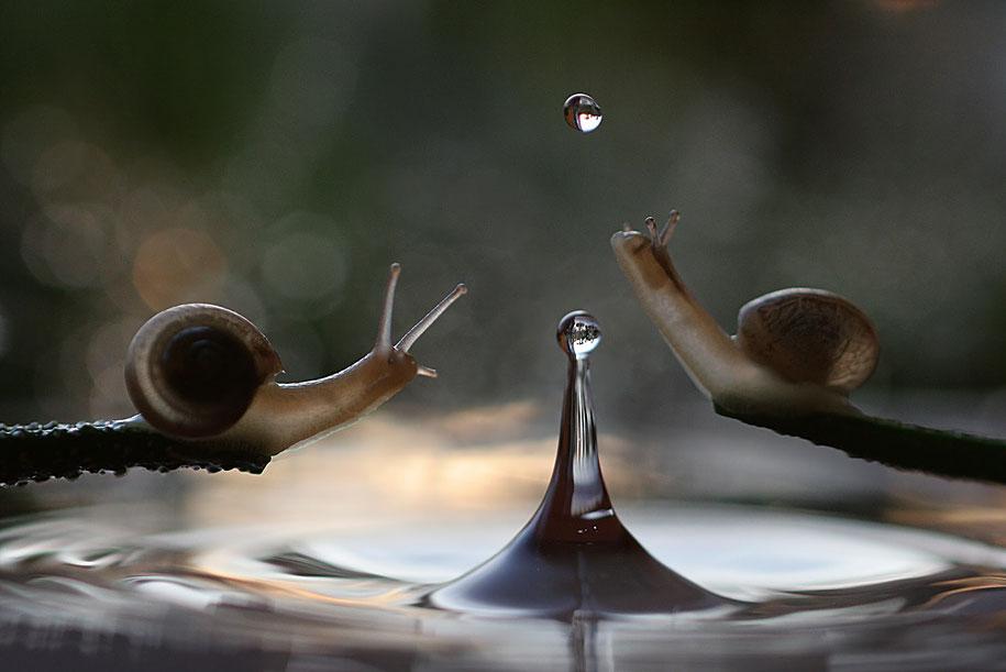 bugs-snails-mushrooms-macro-photography-nature-vadim-trunov-3