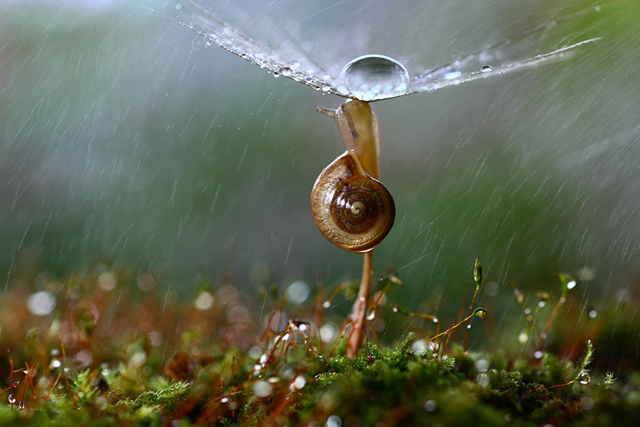bugs-snails-mushrooms-macro-photography-nature-vadim-trunov-4