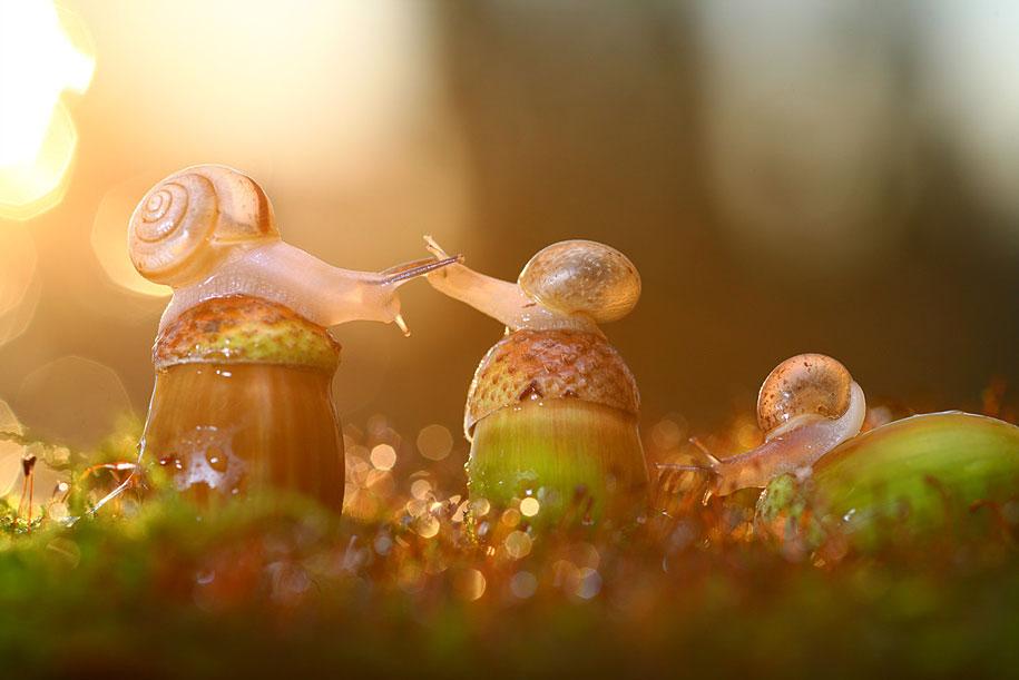 bugs-snails-mushrooms-macro-photography-nature-vadim-trunov-5