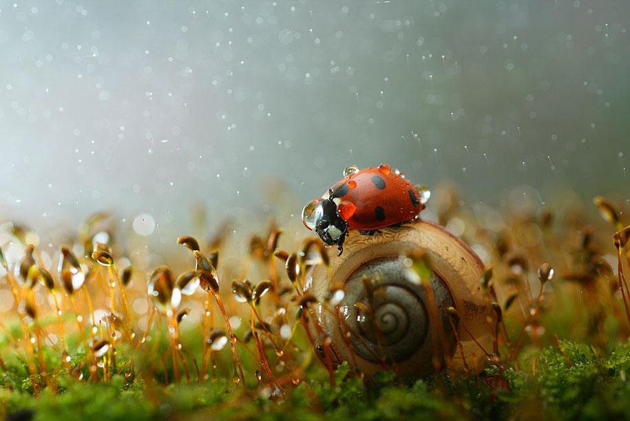 bugs-snails-mushrooms-macro-photography-nature-vadim-trunov-6