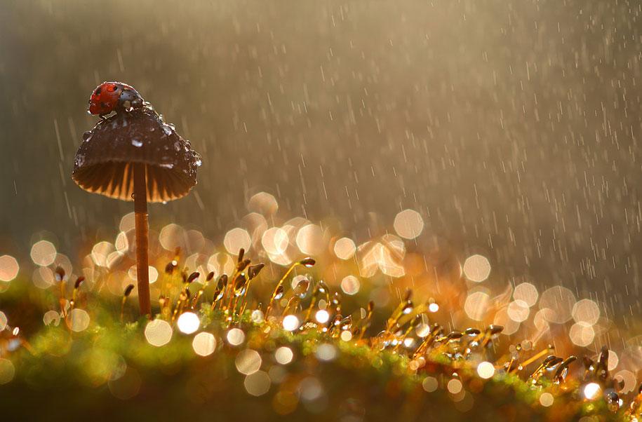 bugs-snails-mushrooms-macro-photography-nature-vadim-trunov-7