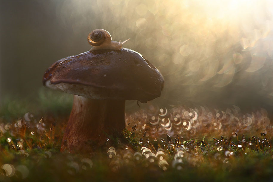 bugs-snails-mushrooms-macro-photography-nature-vadim-trunov-8